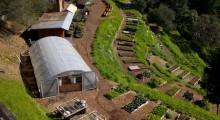 biodynamic-farming