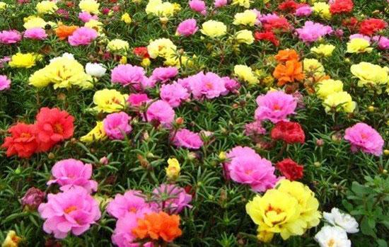 flower-seeds
