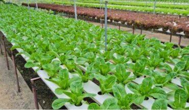 hydroponic-food-produce
