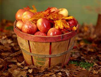 organic-food-basket