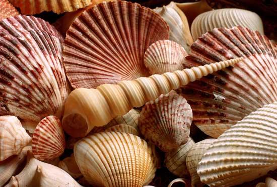 sea-shells