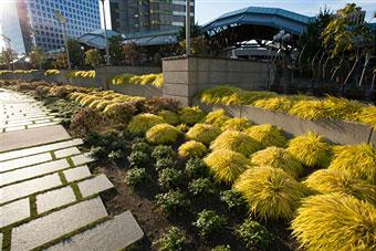 urban-farming-environmental-benefits